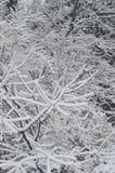 Opad śniegu na gałąź fotografia stock