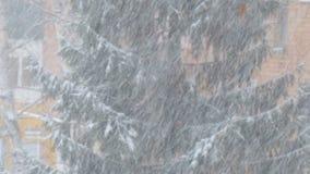 Opad śniegu na tle świerczyna zbiory wideo