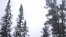 Opad śniegu w lasowym parku Ciężki piękny opad śniegu na zamazanych sosnach i nieba tle Zdjęcie Stock