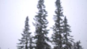 Opad śniegu w lasowym parku Ciężki piękny opad śniegu na zamazanych sosnach i nieba tle Fotografia Stock