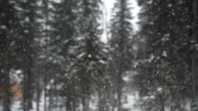 Opad śniegu w lasowym parku Ciężki piękny opad śniegu na zamazanych sosnach na tle Zdjęcie Royalty Free