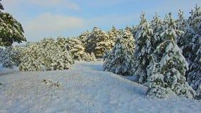 Opad śniegu w lasowym parku Zima krajobraz w śnieżystym parku ciężki opad śniegu Obraz Royalty Free