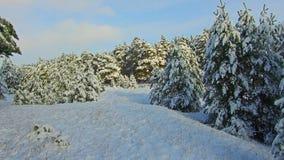 Opad śniegu w lasowym parku Zima krajobraz w śnieżystym parku ciężki opad śniegu Zdjęcie Royalty Free