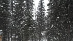 Opad śniegu w lasowym parku Zima krajobraz w śnieżystym parku Ciężki piękny opad śniegu Obraz Stock