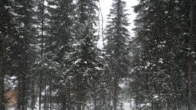 Opad śniegu w lasowym parku Zima krajobraz w śnieżystym parku Ciężki piękny opad śniegu Obrazy Stock