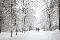 Opad śniegu w parku, śnieżna zimy droga, śnieg zakrywający drzewo krajobraz zimny sezon pogody pojęcie fotografia royalty free