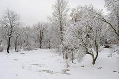 Opad śniegu w parku fotografia stock