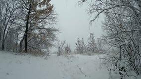 Opad śniegu w zima śniegu lasowy spadać obfity nad lasem zbiory wideo