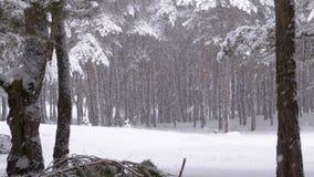 Opad śniegu w zima sosnowym lesie z śnieżystymi gałąź choinkami zdjęcie wideo