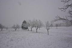 Opad śniegu zakrywa everything z bielem, drzewami i łąkami, zdjęcie stock