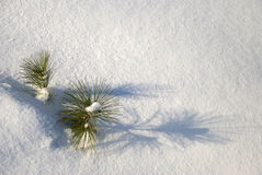 opad śniegu Fotografia Royalty Free