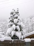 Opad śniegu w Alps Zdjęcia Stock