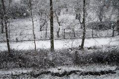 Opad śniegu w ogrodowej zimie Fotografia Royalty Free