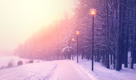 Opad śniegu w parku Fotografia Royalty Free