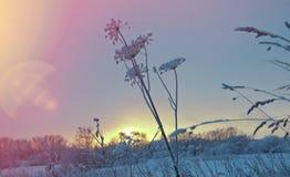 Opad śniegu zimy krajobraz Obrazy Stock