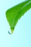 opadowa liść vertical woda Fotografia Royalty Free