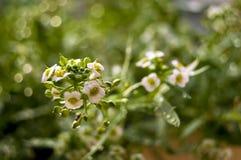 Opadowa woda na roślinach Obrazy Stock