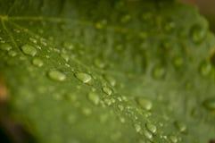 Opadowa woda na roślinach Zdjęcia Royalty Free