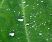 opadowa zieleni liść woda obraz royalty free
