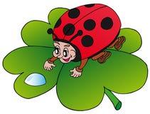 opadowy ladybird Zdjęcie Royalty Free