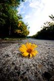 Opadowy Meksykański kwiat Obraz Royalty Free