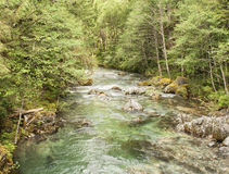 Opal Creek Oregon Hiking Royalty Free Stock Images