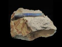 Opale de fossile de bélemnite Photo stock