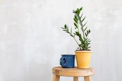 Opanowany flowerpot i kubek obraz stock