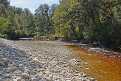 The Oparara River Near Karamea, New Zealand. The Oparara River Near Karamea, West Coast New Zealand. Note the amazing golden brown Tea colour of the water royalty free stock photos