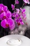 Opary od nawilżacza w fronf storczykowi kwiaty Zdjęcie Stock