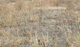 Oparzenie las dla uprawiać ziemię, przesuwanie się kultywacja obrazy stock