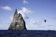 Opatrzność petrlu seabird dobro piłka ostrosłupa władyki Howe wyspa obraz royalty free