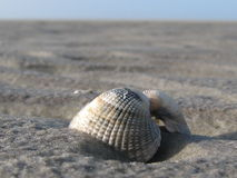 Ope shell on the beach Royalty Free Stock Images