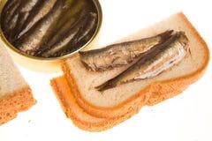 Open能和西鲱三明治在被隔绝的背景的 图库摄影