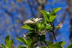 Open подогнал бабочку на зеленые листья Стоковые Изображения