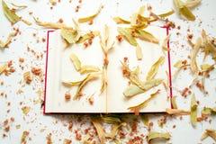 Open agenda in juni - de maand van bloeiende kalk Royalty-vrije Stock Foto