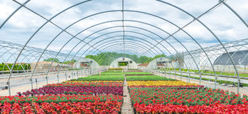 Open Air Greenhouse With Blooming Flowers royalty free stock photo