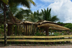 Open air humpback whale skeleton display on the beach in Ecuador Stock Photo