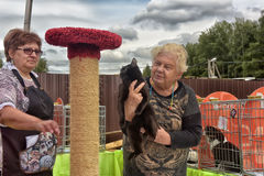 Open Air International Cat Show Stock Image