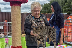 Open Air International Cat Show Stock Images