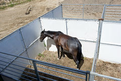 Open-air stable. Top view of the horse in the open-air stable Royalty Free Stock Photos