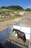 Open-air stable. Scenic view of the horse in the open-air stable on the polish countryside Stock Images