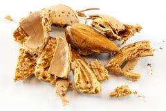 Open almond nut Royalty Free Stock Photo