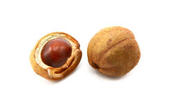 Free Open And Closed Seed Cases Of The Red Horse Chestnut Royalty Free Stock Photo - 46105135