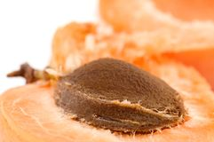 Open apricot royalty free stock photography
