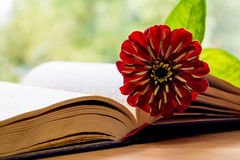 Open Bible and flower Stock Images