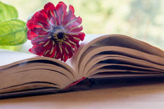 Open Bible and flower Royalty Free Stock Image