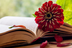 Open Bible and flower Royalty Free Stock Photo