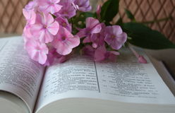Open Bible and lilac flowers. Open Bible and a fresh lilac flowers on a brick wall background royalty free stock photography