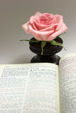 Open Bible. Bible open to the chapter of John with a pink rose in the background Stock Photography